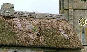 the thatched roof badly needing repair